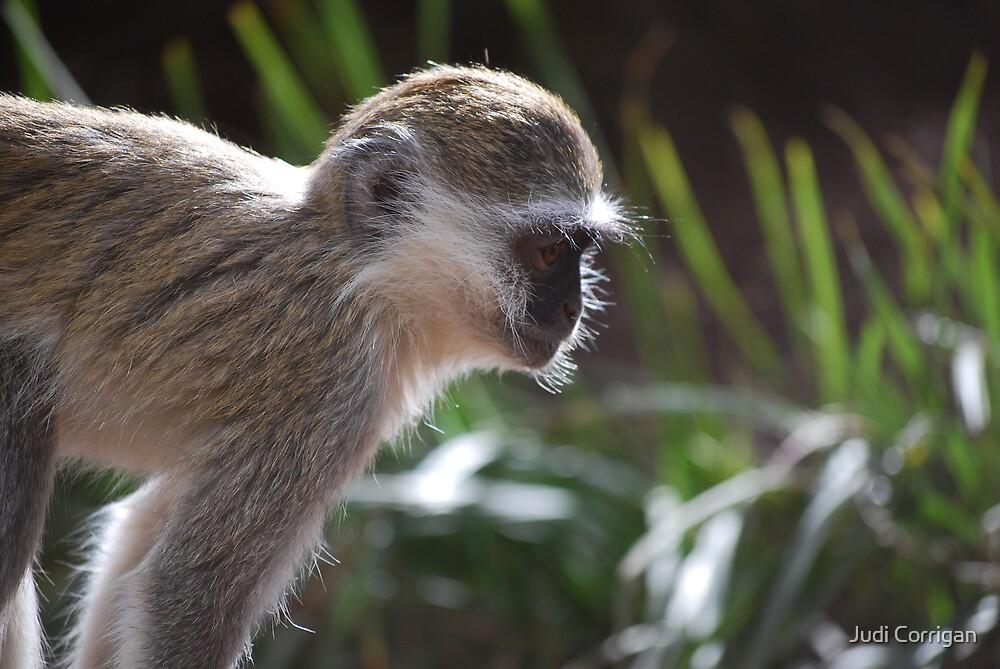 Monkey see by Judi Corrigan