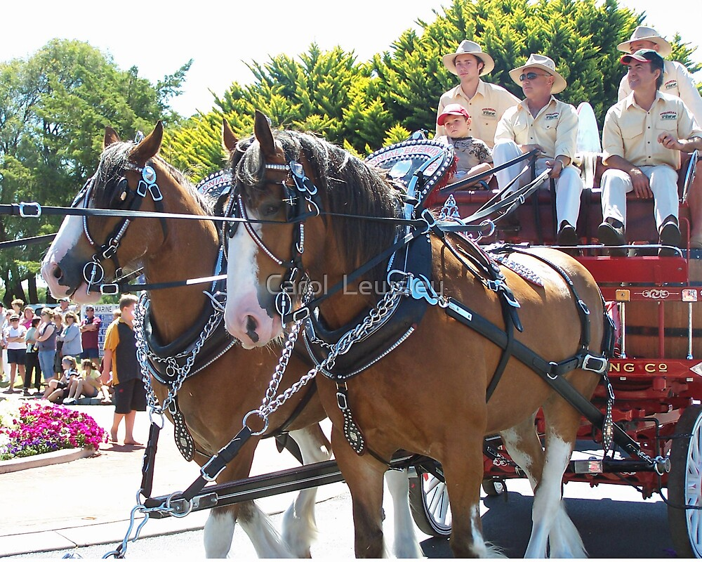 clydesdales on parade by Carol  Lewsley