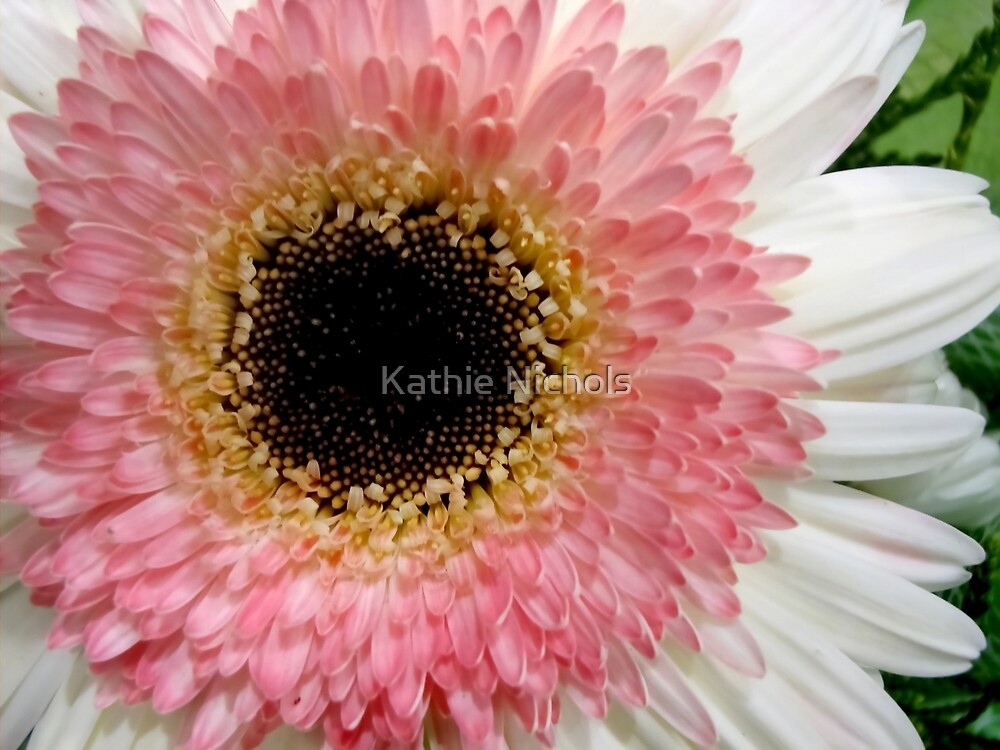 Baby Pink by Kathie Nichols
