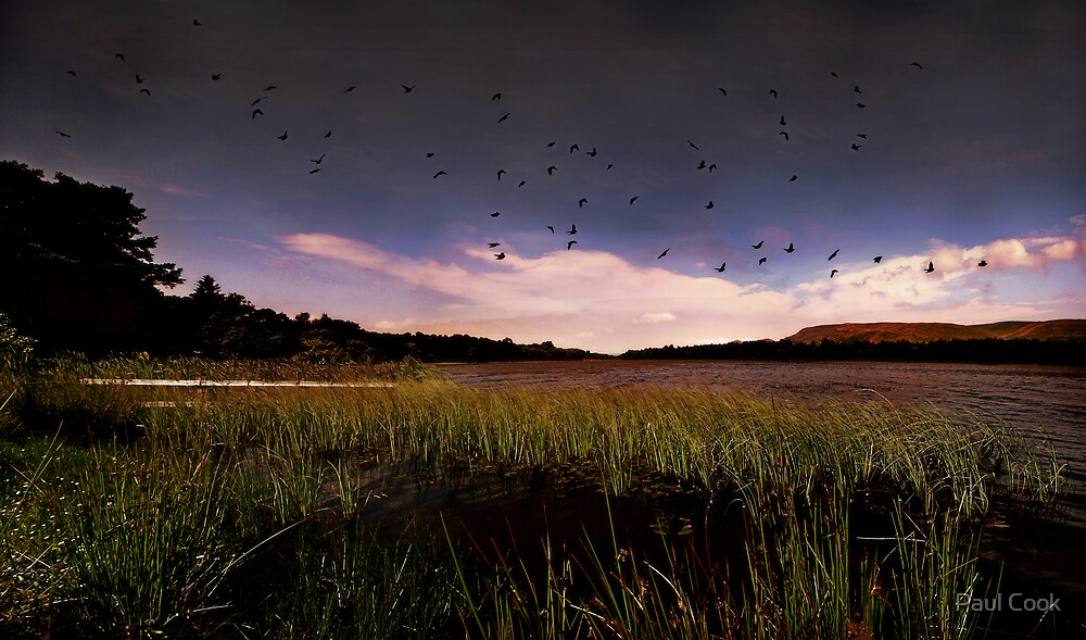 Home To Roost by Paul Cook