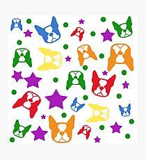 Boston Terrier explosion - Bostons: rainbow colors Photographic Print