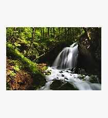 Magical waterfall in enchanting green forest Photographic Print