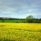 Canola and Shale by Tom Gomez