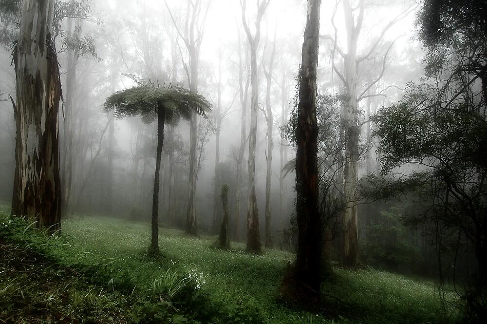 Ancient Mist by Sue Wickham