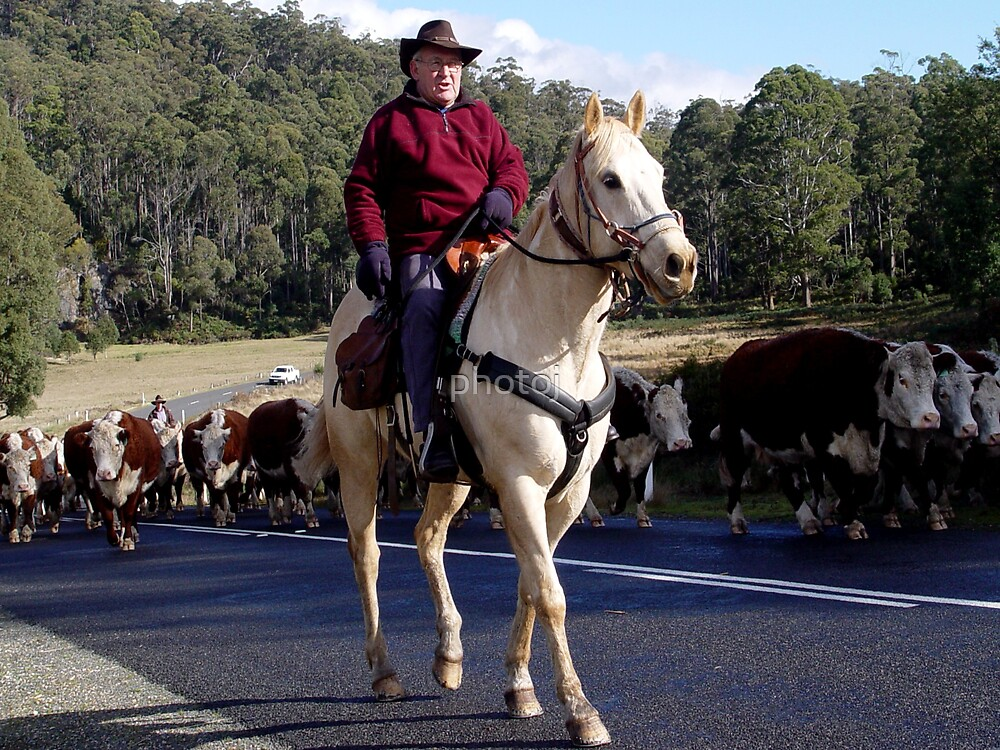 photoj 'Tassie Stockman and their Cattle' by photoj