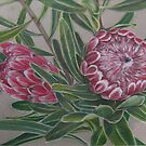 Protea by Thanh Duong