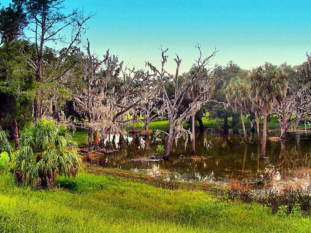 Florida Swamp by TerryDavey