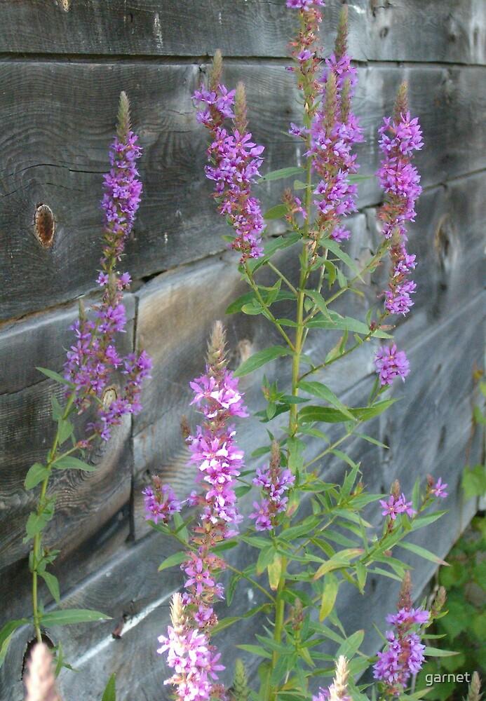 Wild Flower by garnet