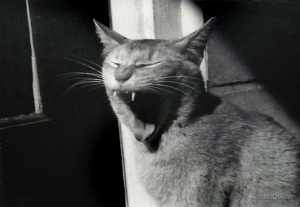 I'm soooo tired...! by Roz McQuillan