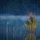 Beautiful Tasmania by Rhana Griffin