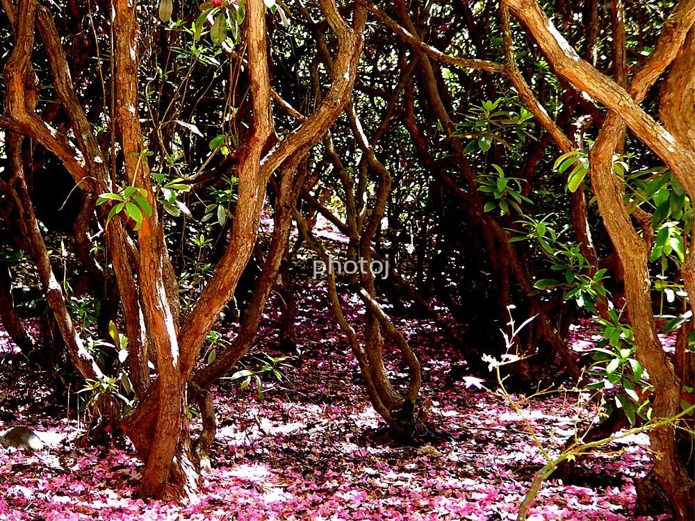 photoj 'A Pink Day' by photoj