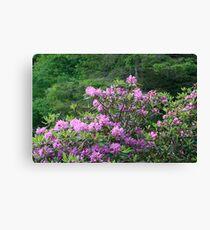 Catawba Rhododendron Canvas Print