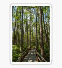 Wooden boardwalk through cypress trees Sticker
