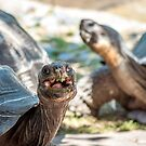 Happy Turtle by Christian Sheehy