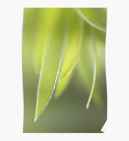 Bottlebrush Leaf Poster