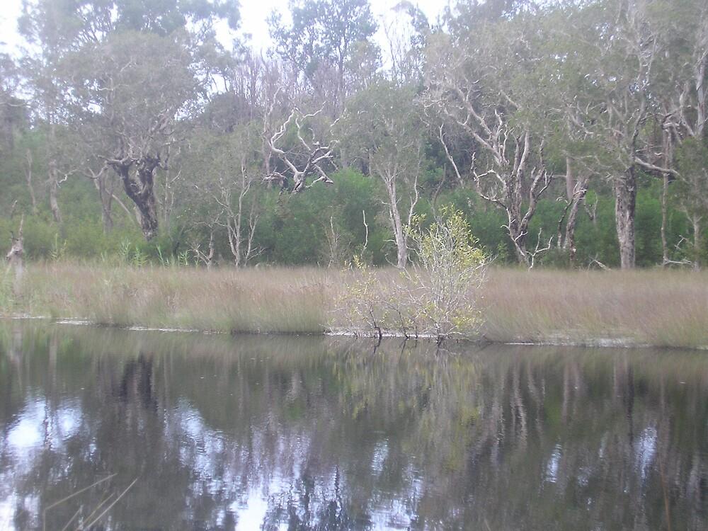 Bushy Creek by Gracie Townsend