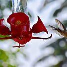 HummingBird Fly by TiffMilkMusic