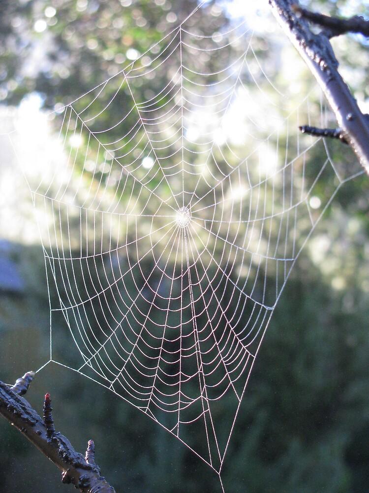 Cobweb I by Alice Chai