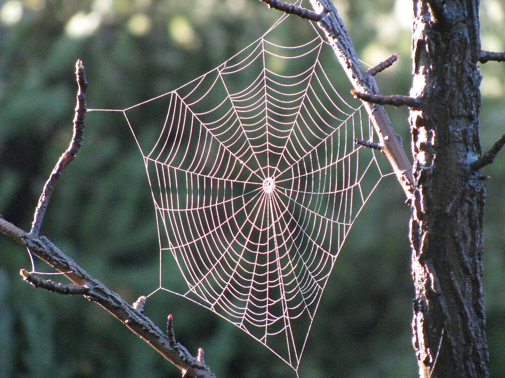 Cobweb II by Alice Chai