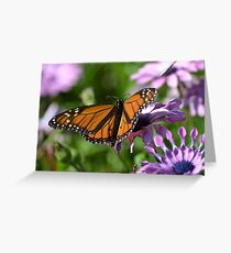 Purple Daisies and the Monarch Butterfly Greeting Card