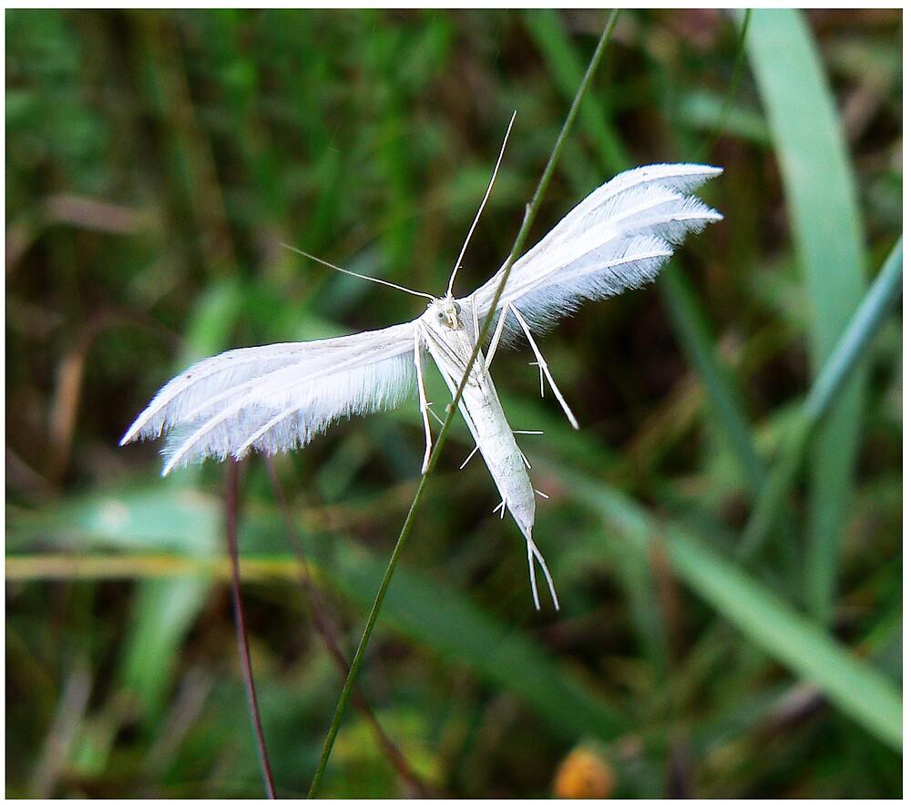 Tightrope Walker by avocet