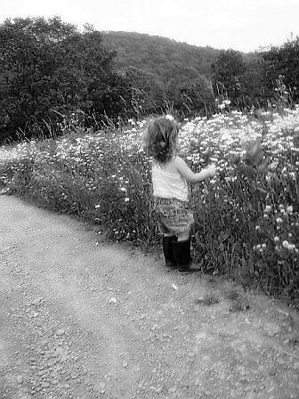 picking wild flowers by JessieMac