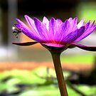 Lotus by Dr. Harmeet Singh