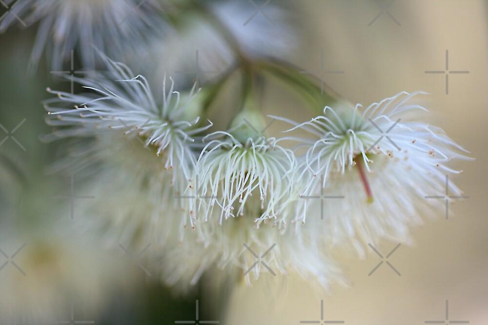 Hush - Eucalyptus Flowers  by Joy Watson