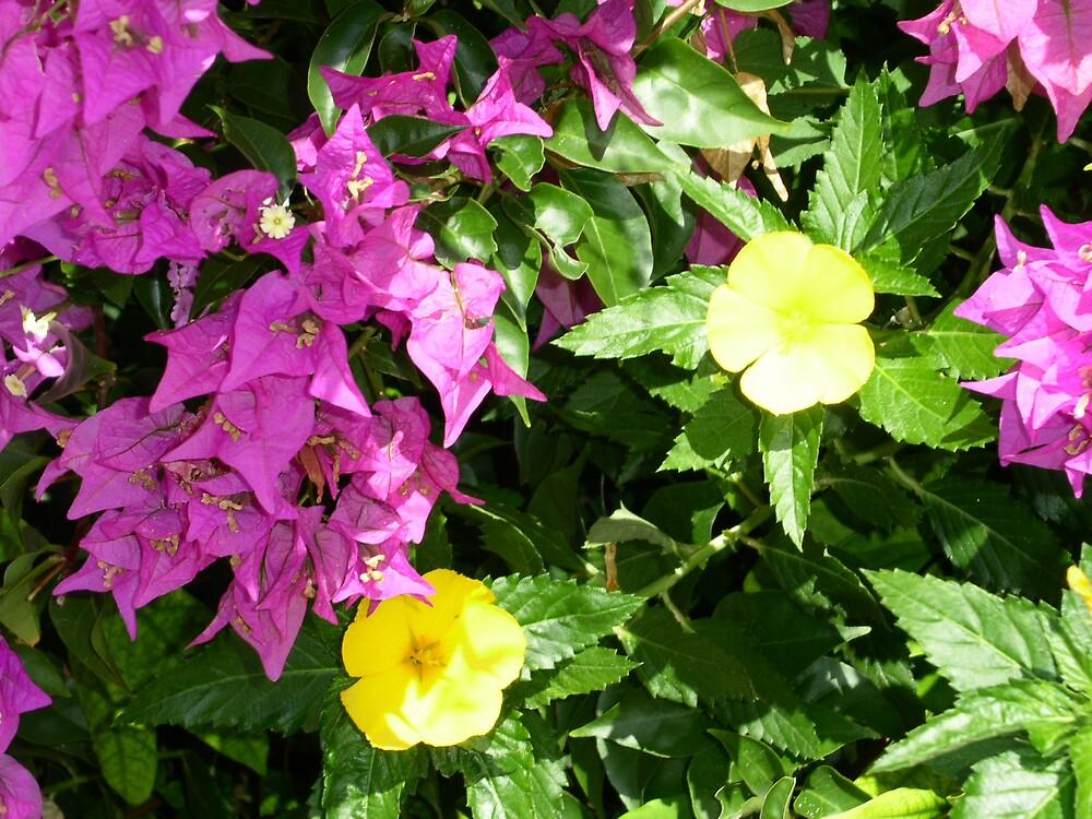 Flowers - Caribbean Island - 1 by ouellettep