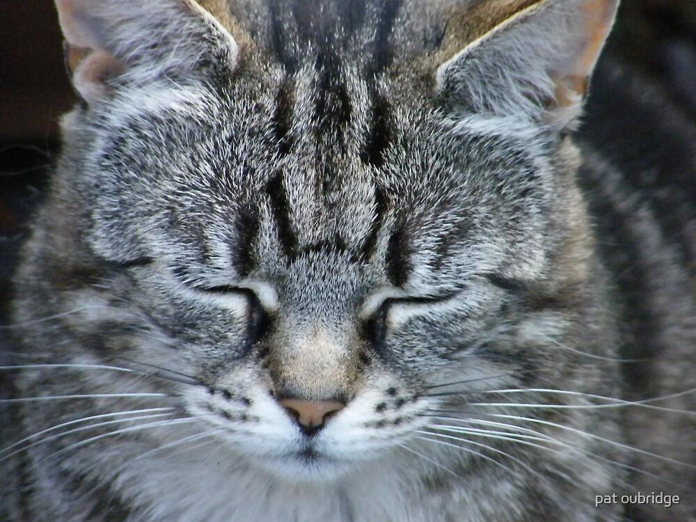 Go Away !!!!!  I'm Asleep by pat oubridge
