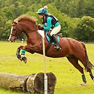 Brandy at Hunter Trials, 4th June 2017 by Suzy Shipman