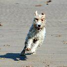 Beach Fun - Shaun by Andrew  Kerry