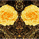 Yellow Roses, by Forfarlass