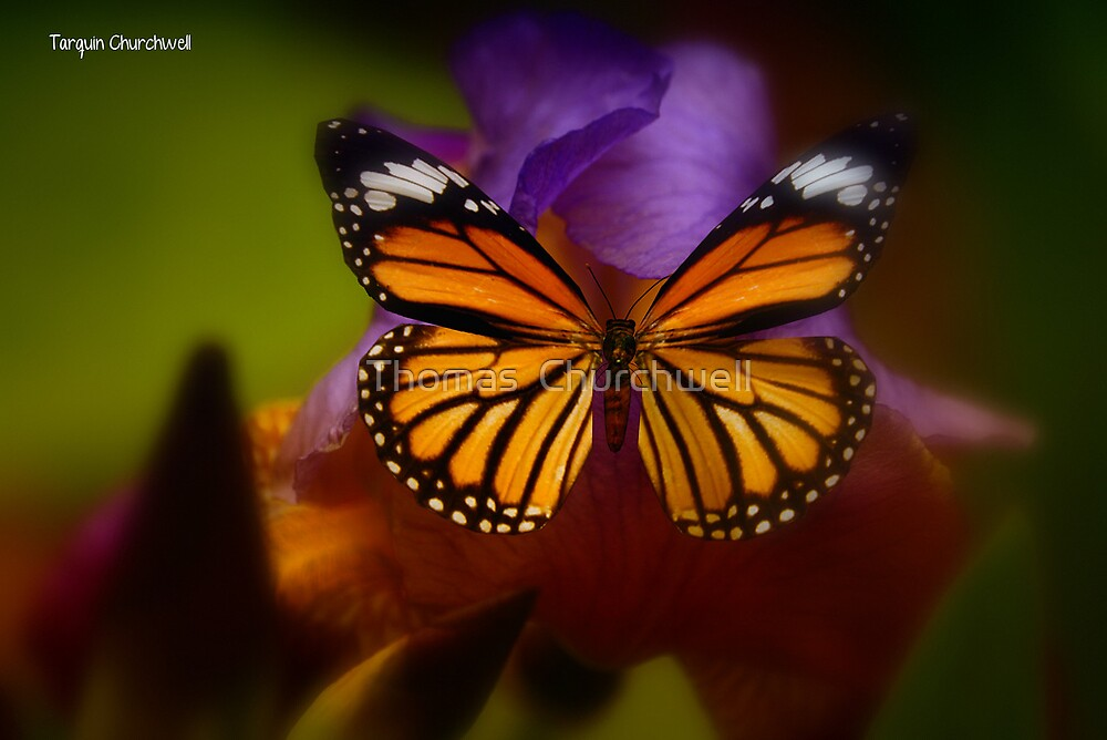 Butterfly by Thomas  Churchwell