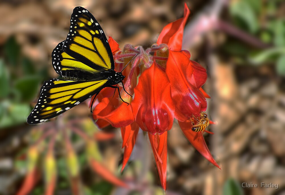 Sweet Nectar by Claire  Farley