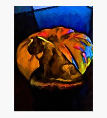 Cat in a Pumpkin with some Blue Photographic Print