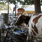 Free grazing the trash by David Tovey