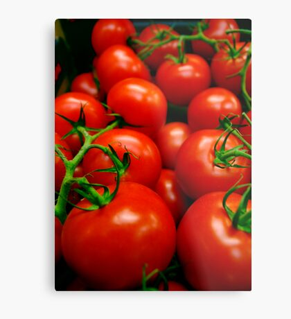 A Crop of Tomatoes  Metal Print