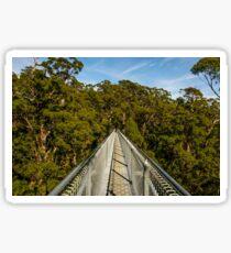 Valley Of The Giants (Tree Top Walk), Denmark, Western Australia Sticker