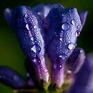 purple drops by Danielle  Kay