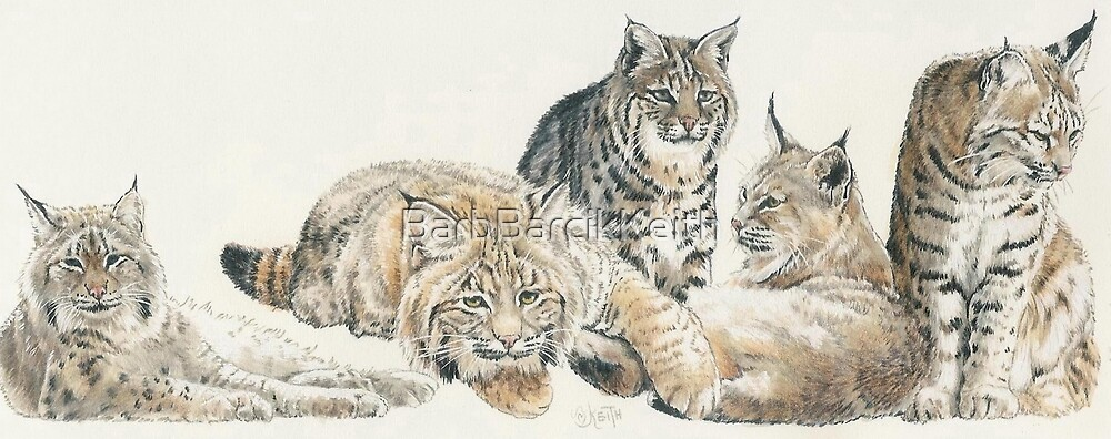 American Bobcat by BarbBarcikKeith