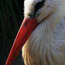 Beaky by wahboasti