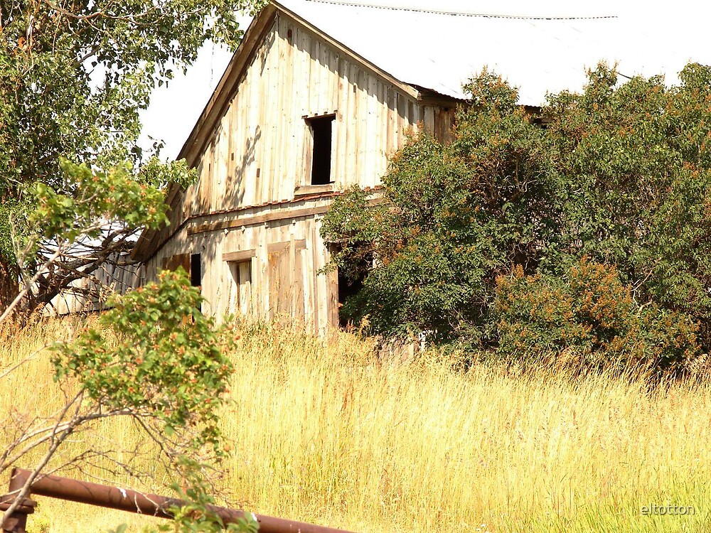 This Old House by eltotton