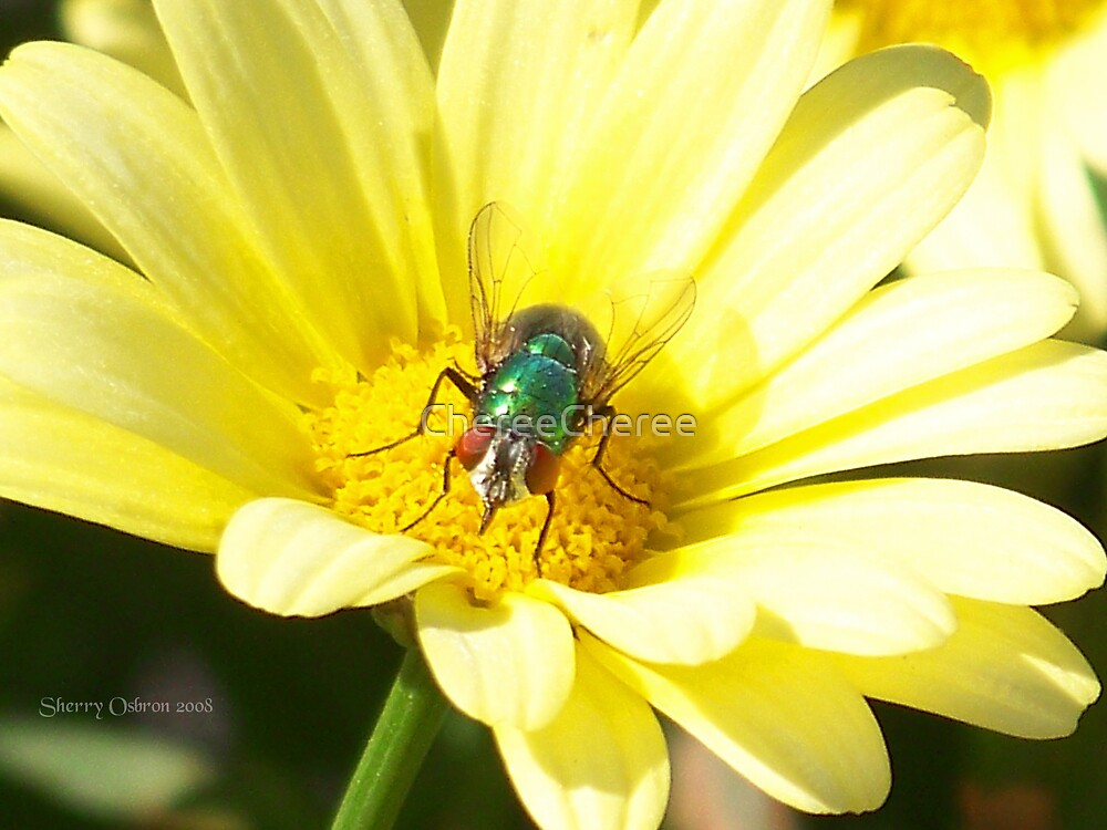 A Bugs Llife by ChereeCheree