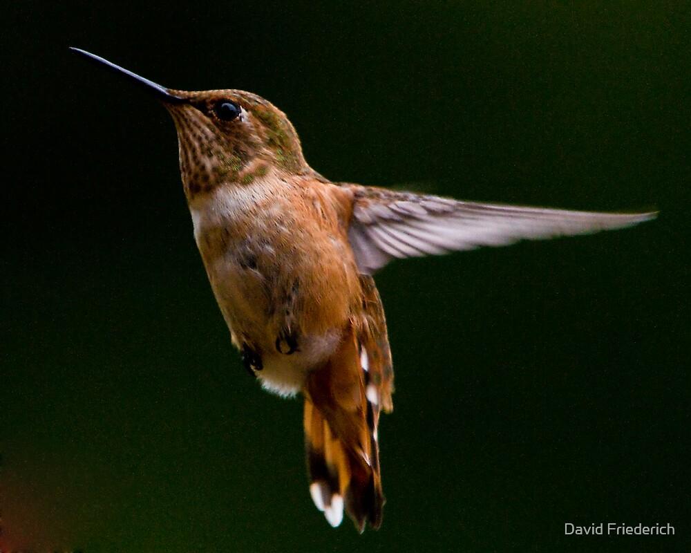 Hummingbird Summer by David Friederich