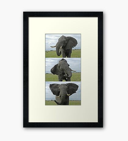 African Elephant threat display sequence Framed Print