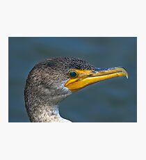 Portrait of a Cormorant Photographic Print