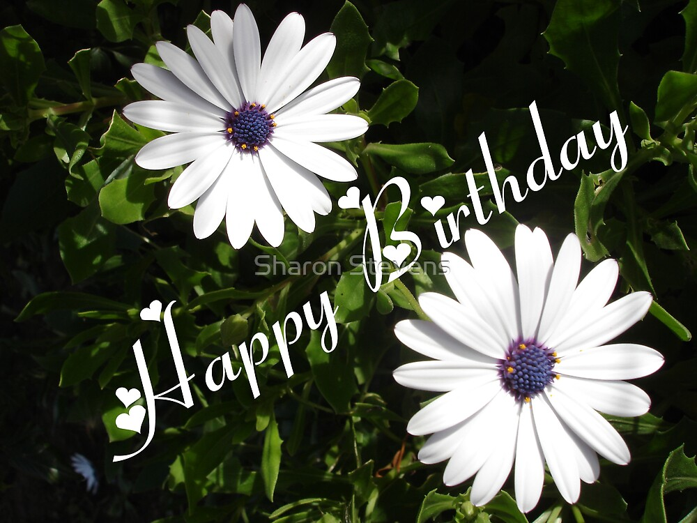 Happy Birthday Daisies by Sharon Stevens