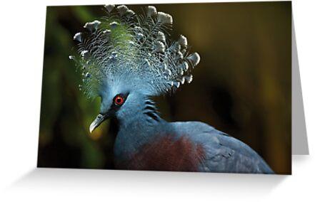 Victoria Crowned Pigeon by Dominika Aniola