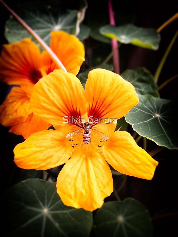 Bee in flower by Silvia Ganora